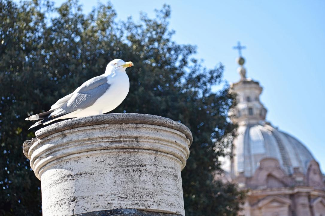 viaggio a Roma 1